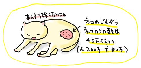 ネフロンの数