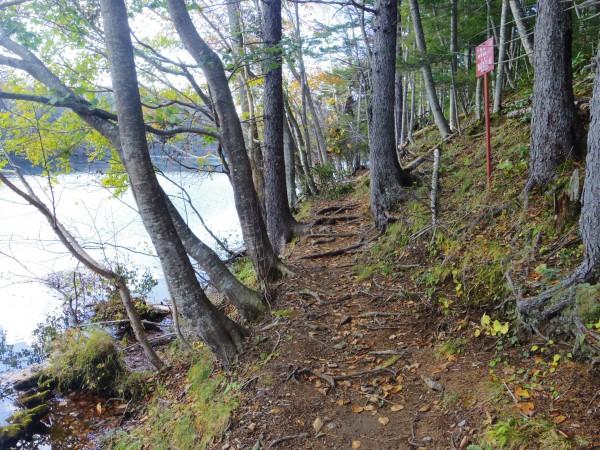 観光道路の対岸の湖岸周辺はこの様な山道だが歩ける
