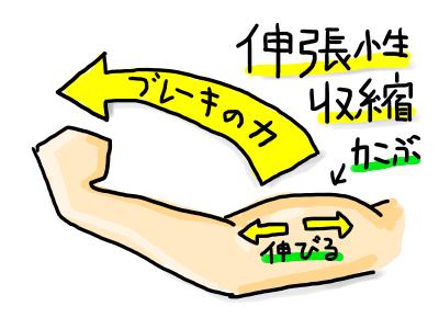 伸縮性収縮