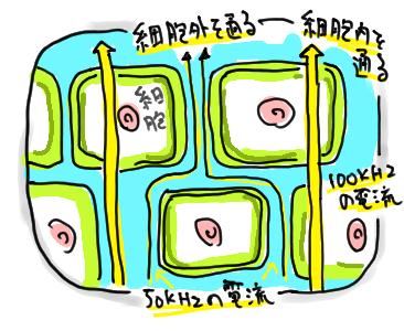 細胞の電気の流れ方