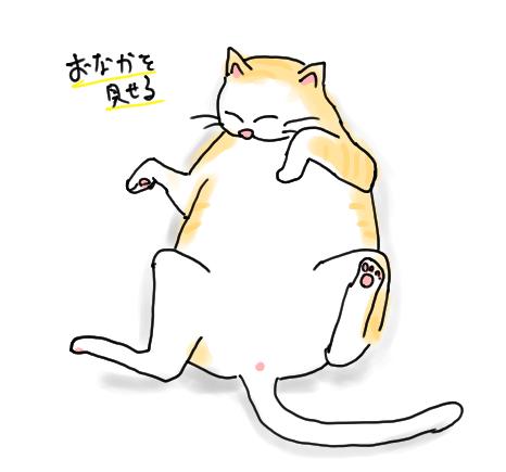 おなかを見せる猫